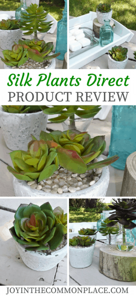 Silk Plants Direct Product Review of Potted Succulents